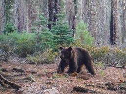 We saw 4 bears (two larger and two cubs) the first morning.