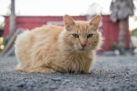 Scat Cat!