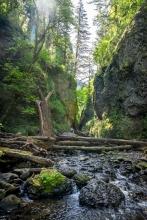 Oneonta Gorge.
