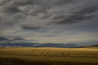 Montana country side, as snapped on the drive out of town.