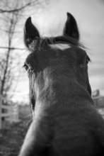 Horse selfie...